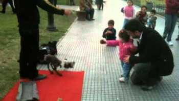 Amazing Dog Puppeteer Plays Fetch With Little Girl