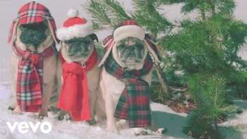 Look At These Cute Disguised Pugs For She & Him's 'Winter Wonderland'