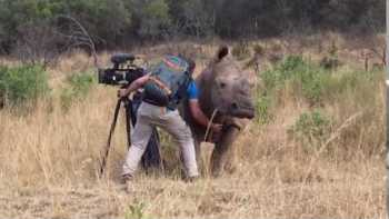 Rhino Requests Belly Rubs From Filmmaker
