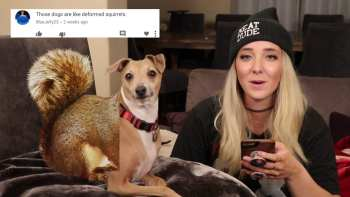 The Dogs Of The Internet Have To Suffer Through Mean Comments Too