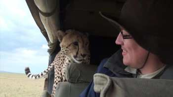 You Probably Aren't Chilling Out When A Cheetah Jumps Into Your Car, Or Are You?
