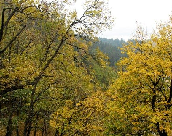 Romanya, Tren, Ağaçlar ve 1453
