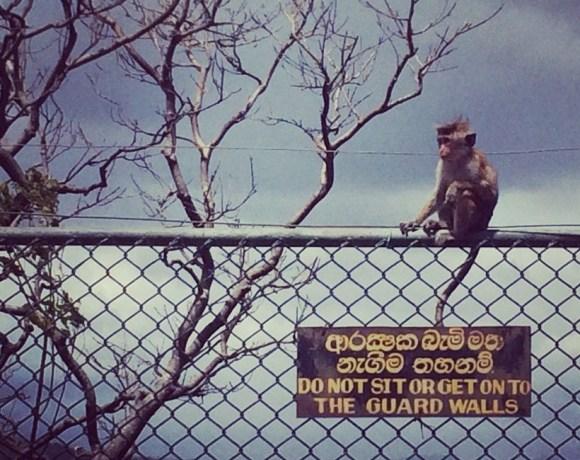 Sri Lanka – Dinozorlar