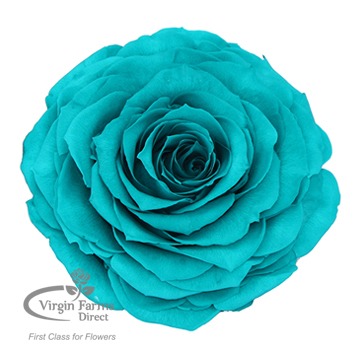 Direct To Retail Fresh Cut Flowers   Virgin Farms Direct Preserved Roses