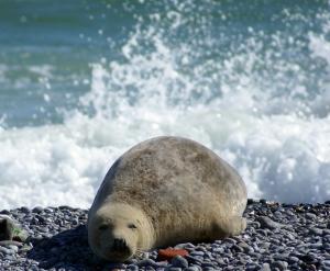 Seal.jpg