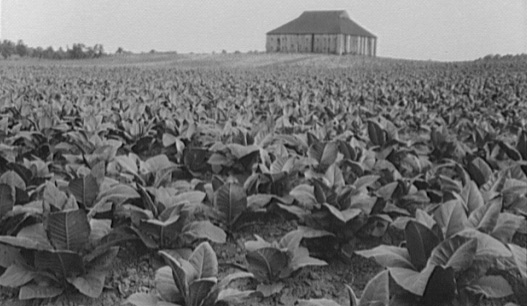 slavery was developed in Virginia so planters could acquire a cheap labor force to grow tobacco