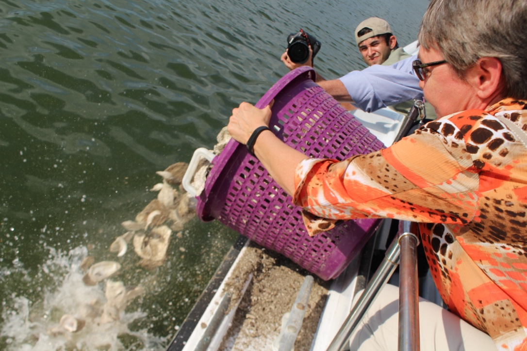 If you eat oysters, then you can help clean the Bay!