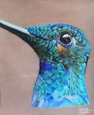 tête de colibri en gros plan