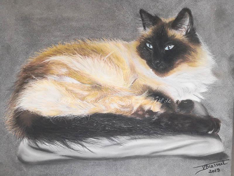 Dessin aux pastels secs d'un chat siamois aux poils longs sur fond gris réalisé par l'artiste peintre Virginie Brassart