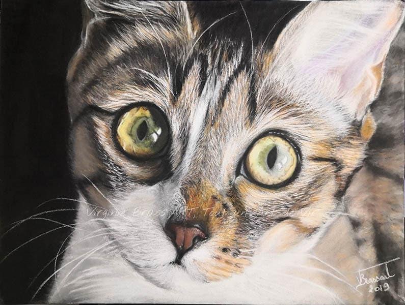 Dessin réaliste aux pastels secs d'un chat tigré en gros plan réalisé par l'artiste peintre Virginie Brassart