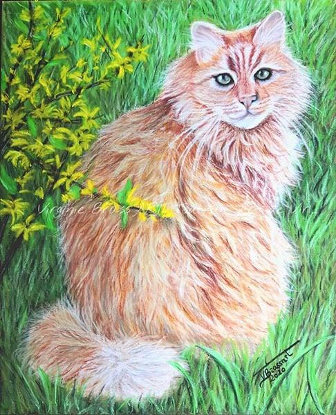 Dessin aux pastels secs d'un chat roux dans l'herbe et fleurs de forsythia réalisé par l'artiste peintre et portraitiste animalière Virginie Brassart