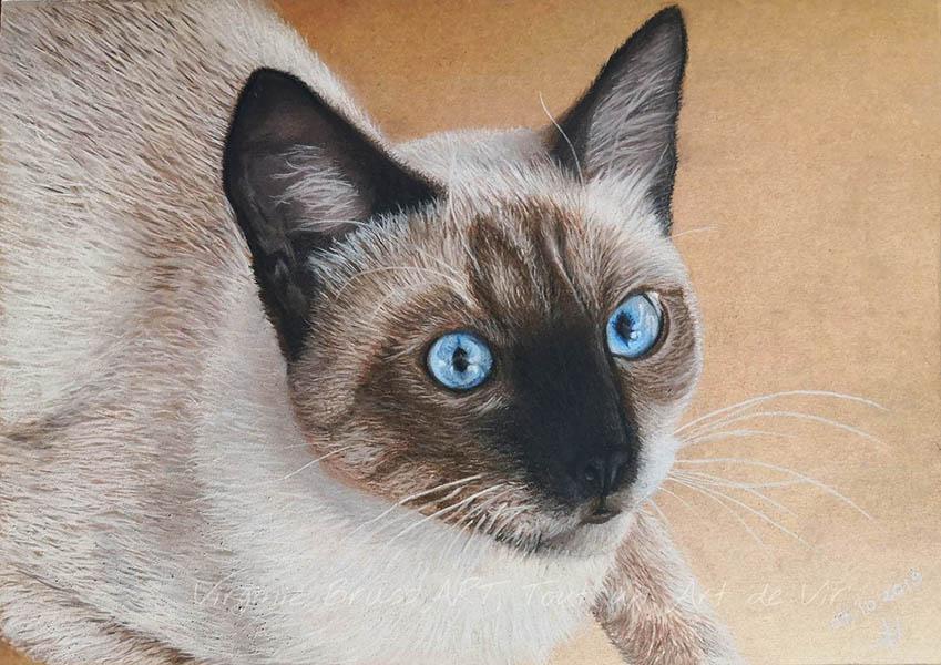 Dessin aux pastels secs d'un chat siamois réalisé par l'artiste peintre et portraitiste animalière Virginie Brassart