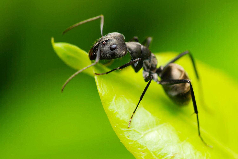 Prodotti Efficaci Contro Le Formiche come eliminare le formiche: rimedi naturali ed efficaci