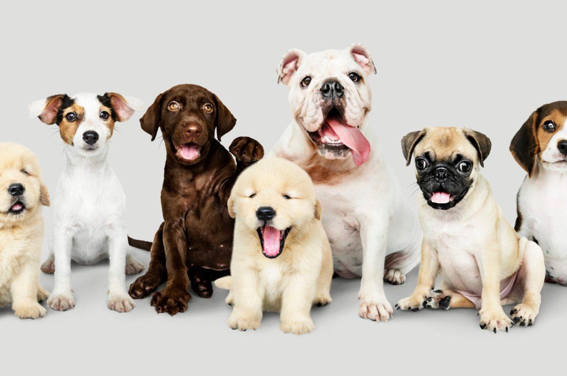 L'alimentazione del cane: questione di taglia e di età!