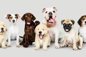 Gruppo di cani seduti