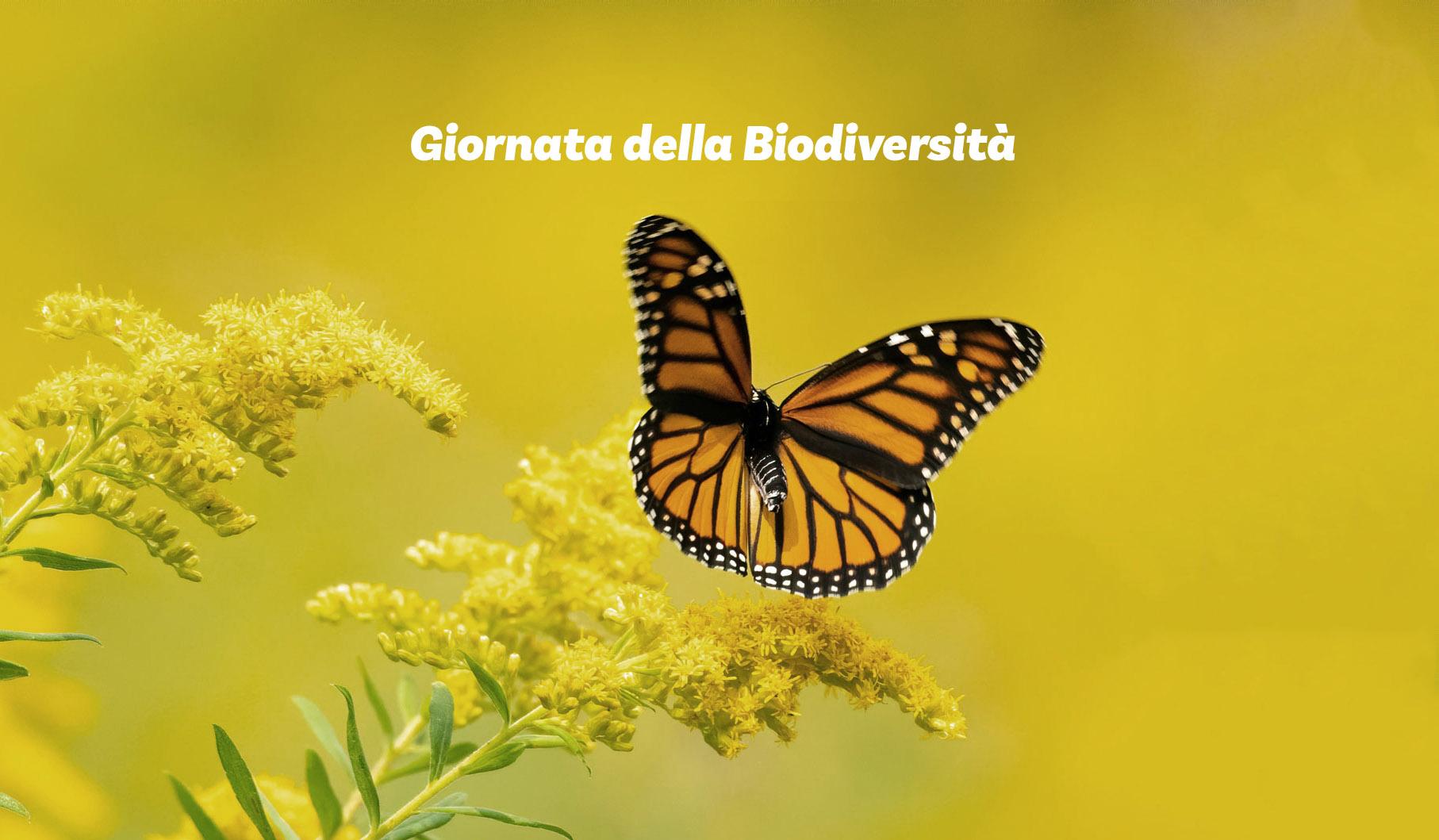 Tutelare la biodiversità