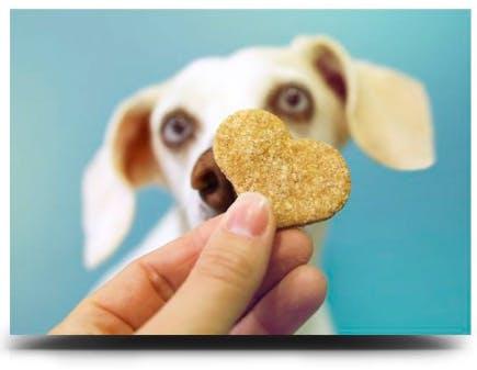 curso Biscoitos saudáveis para cachorro