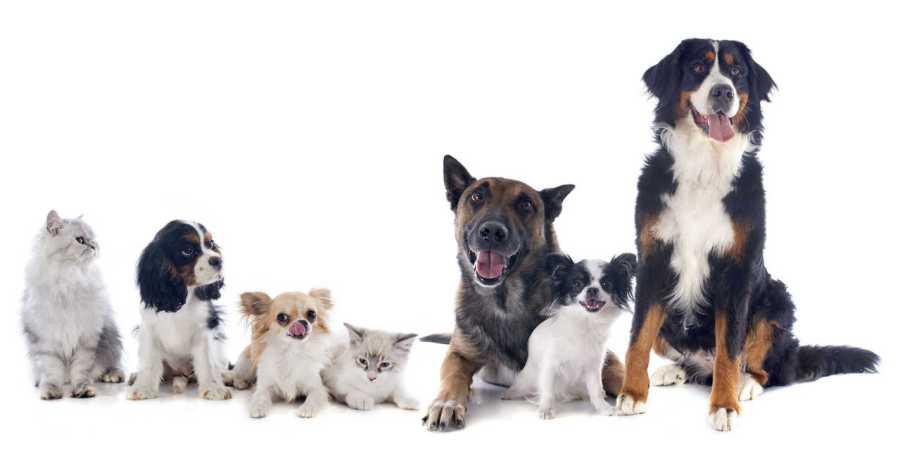 curso de primeiros socorros para cães e gatos online comprar