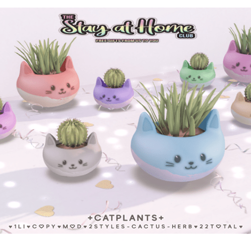Catplants – Gift for Stay at Home
