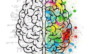 hersenen en kleuren