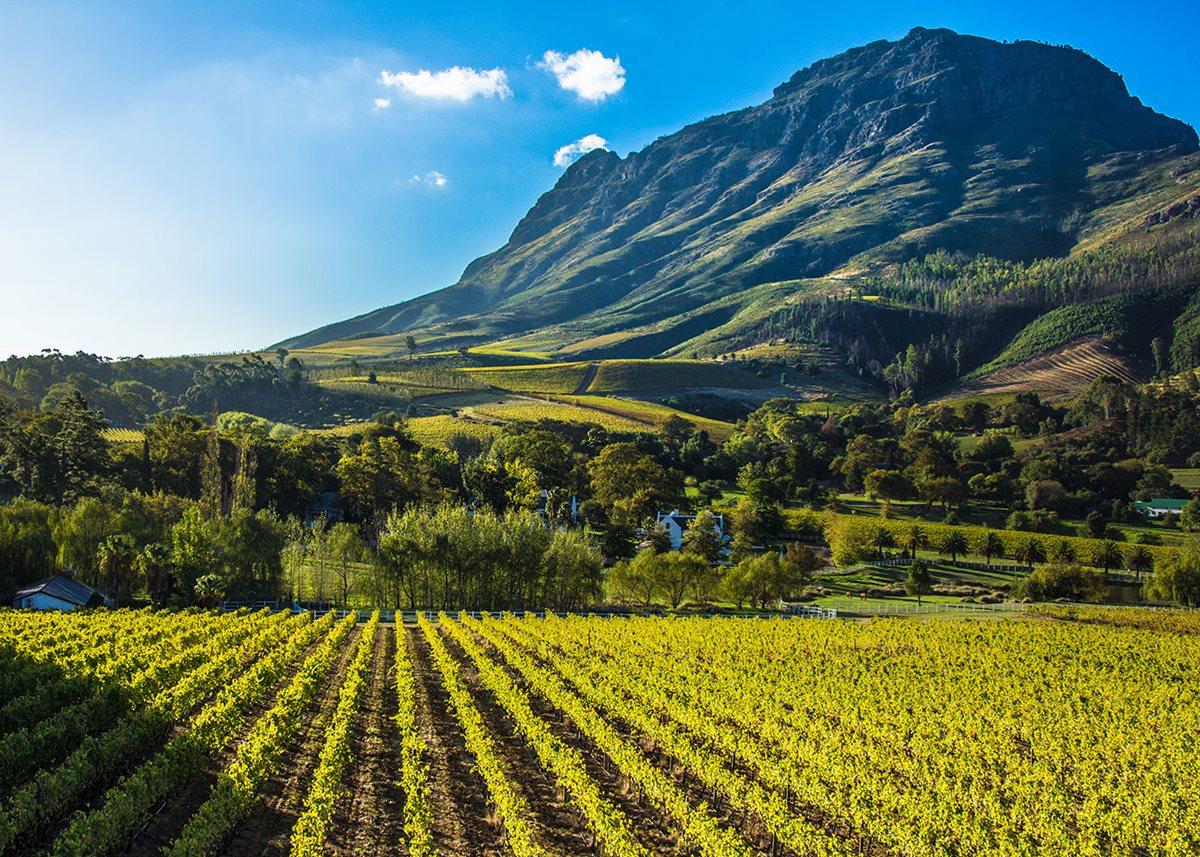 South Africa Travel Winetasting Tour Or Safari Adventure