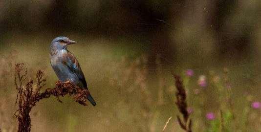 vogels kijken op Mallorca