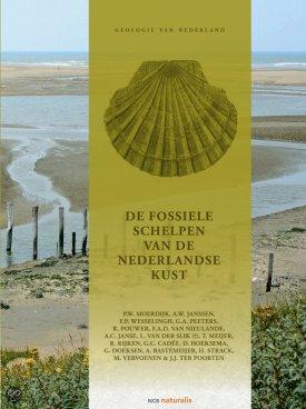 Fossiele schelpen van de Nederlandse kust