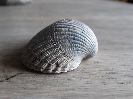 fossiel1
