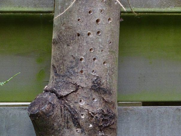 doe het zelf bijenhotel voor in de tuin 1