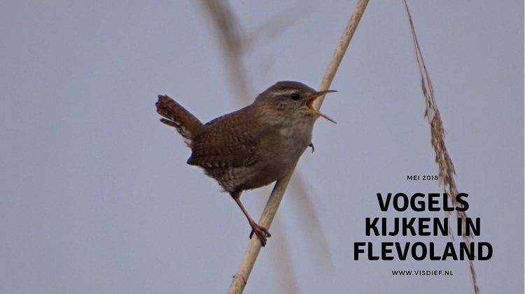 vogels kijken in flevoland