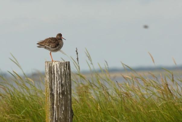 Vogelsafari Texel (Noord-Holland)