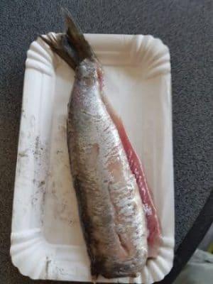 hollandse nieuwe visgilde schot papendrecht