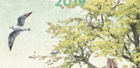 recensie vogelscheurkalender 2019 madeleine gimpel elwin der der kolk
