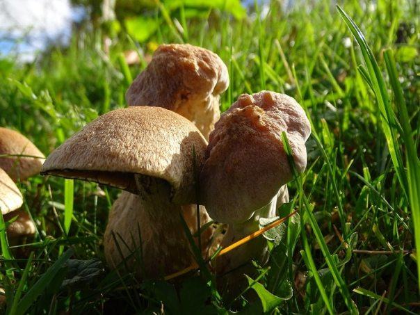 paddenstoelen biesbosch