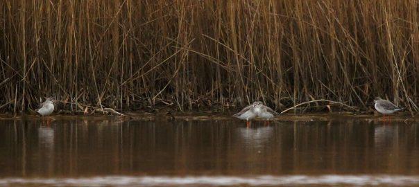 vogels kijken in zeeuwse sloten sjaak huijer