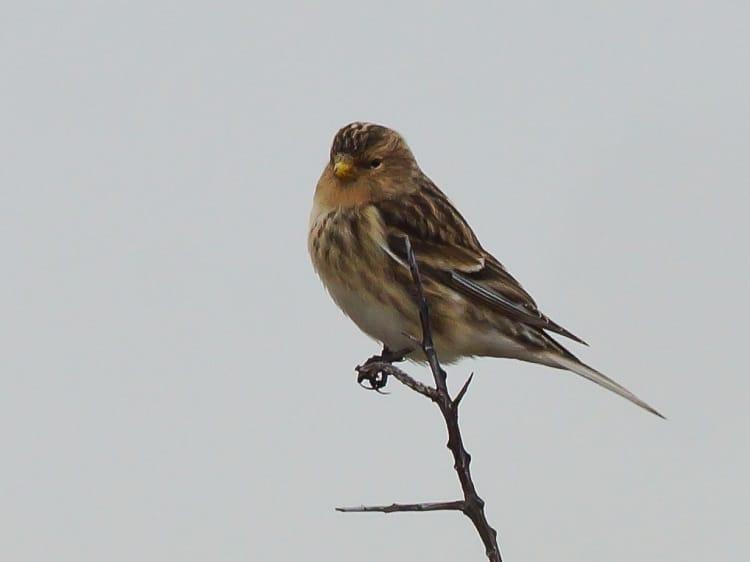 zangvogels kwade hoek sjaak huijer