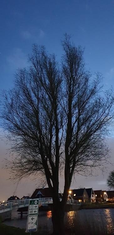 bomen in het donker