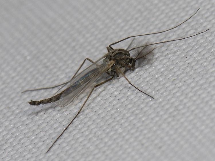 Kunnen we leven zonder muggen