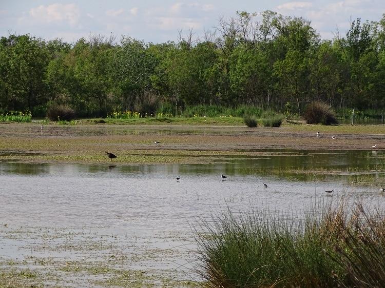 Vogels kijken in Réserve naturelle des Marais du Vigueirat
