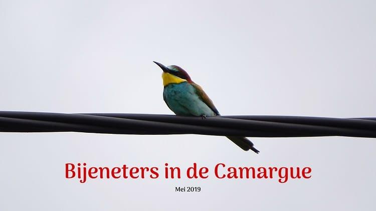 vogelvakantie in de camargue