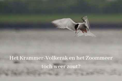 Het Krammer-Volkerak en het Zoommeer weer zout