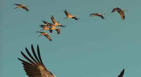 recensie veldgids vogeltrek dick de vos sam gobin