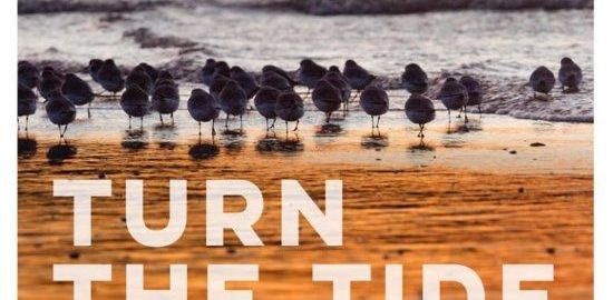 recensie turn the tide birds around the north sea sijmen hendriks