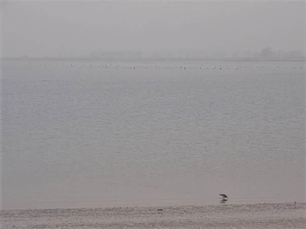 vogels kijken op de oesterdam
