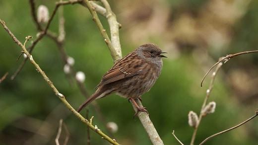 vogelwandeling biesbosch deeneplaat