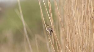 vogelwandeling bij oostvoorne