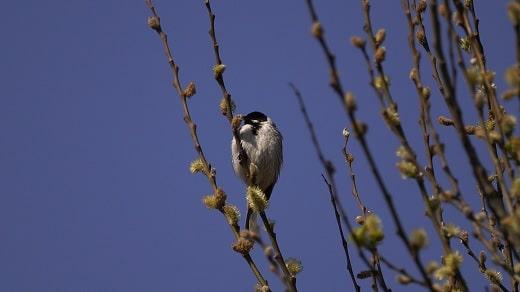 vogelwandeling groene jonker