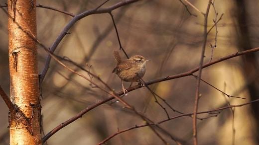 vogelwandeling bij breda door het mastbos