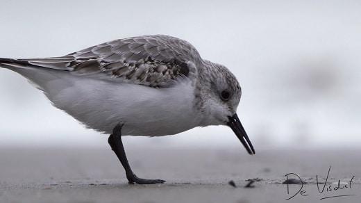 vogelwandeling over de zuidpier bij ijmuiden