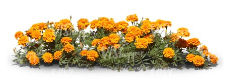 cut out row of orange flowers   cut out trees and plants   VIShopper cut out row of orange flowers
